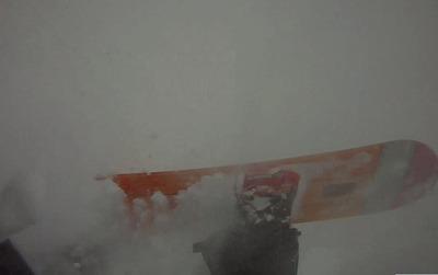新雪こけ.jpg