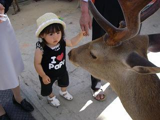 奈良公園鹿初体験.jpg