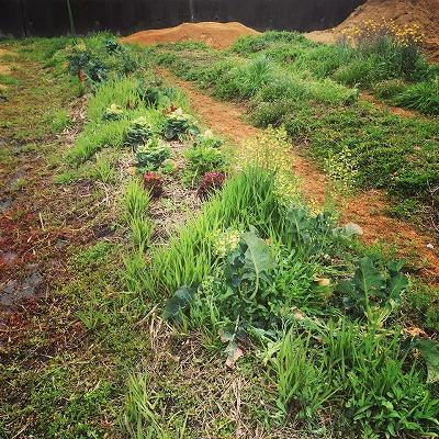 kumaFARM体験農園「畑のがっこう」